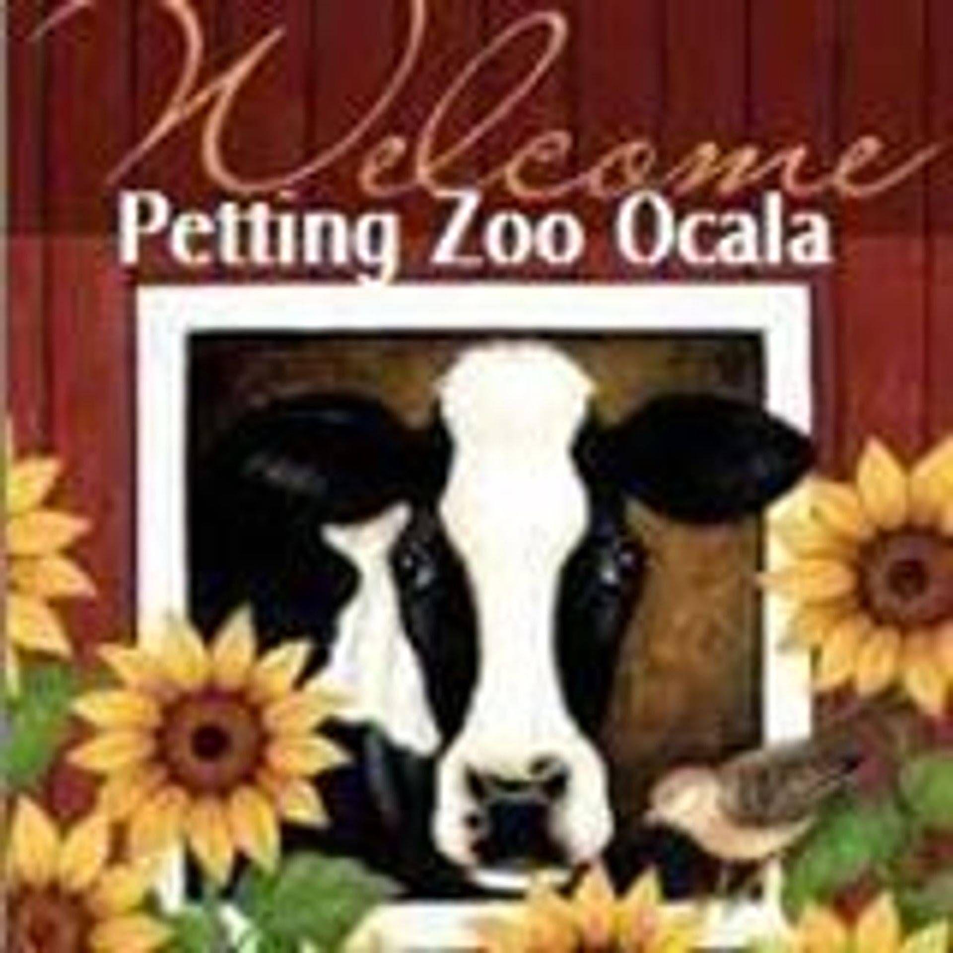 Petting zoo ocala cow painting cow art barn painting