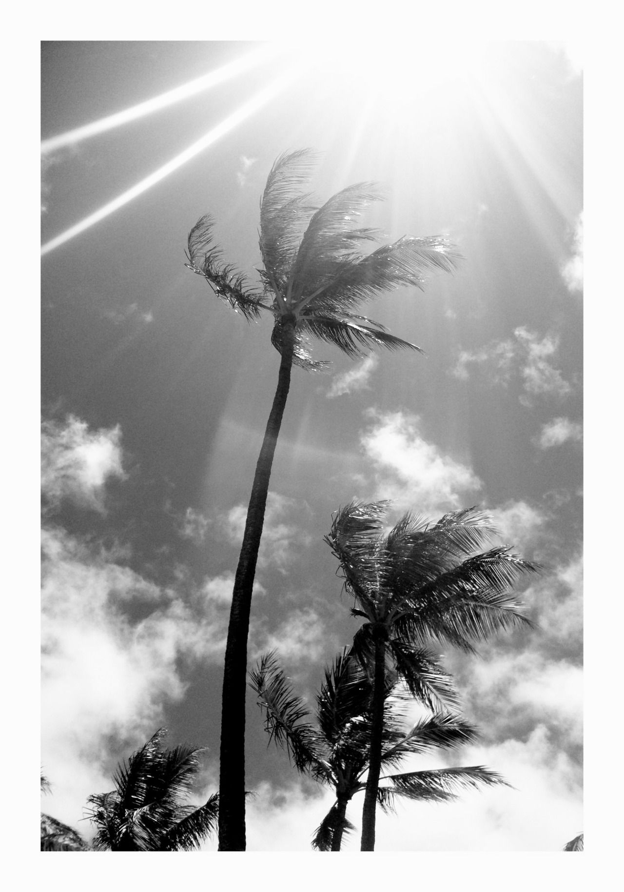 Amazing original black and white photography by yolo on tumblr black and white palm trees