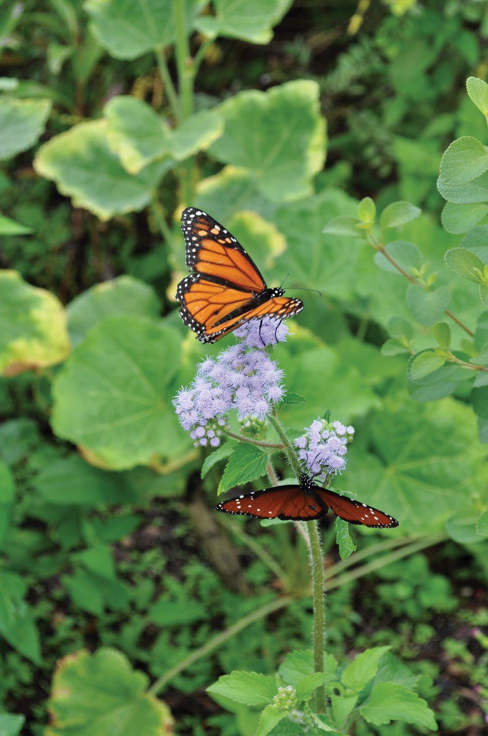 Balancing Act: Creating a Butterfly Garden   Florida ...