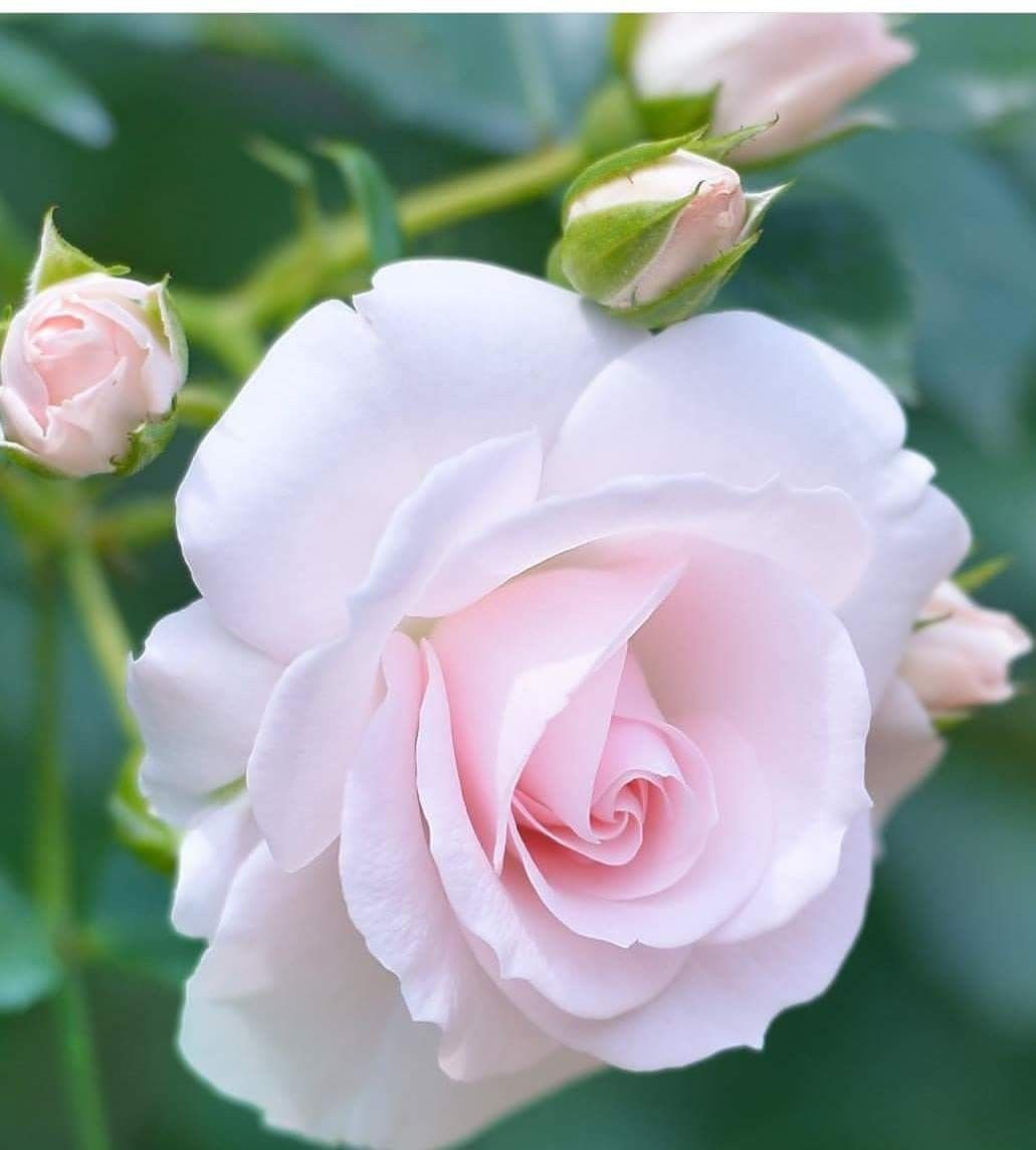 Pin By Paniowang On Flora Pinterest Flowers Beautiful Flowers