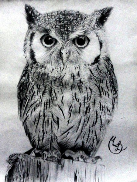 Buho  Animales  Dibujandonet   Pinteres
