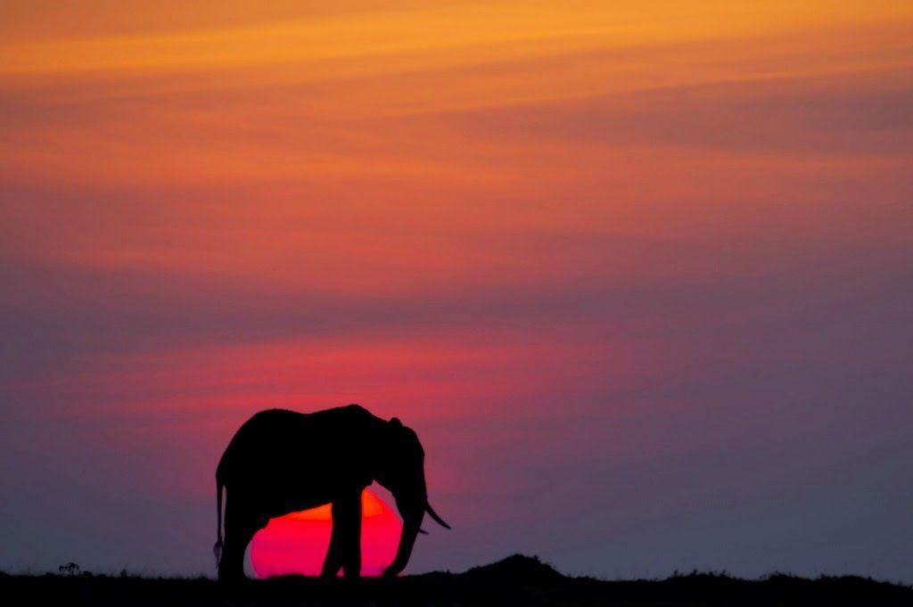 مجموعة من أجمل صور غروب الشمس في كينيا Elephants Photos Beautiful Sunset Pictures Elephant
