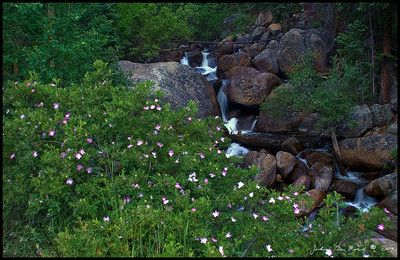 Guanella Pass - Wildflowers appear in summer months (Spring is mud season)