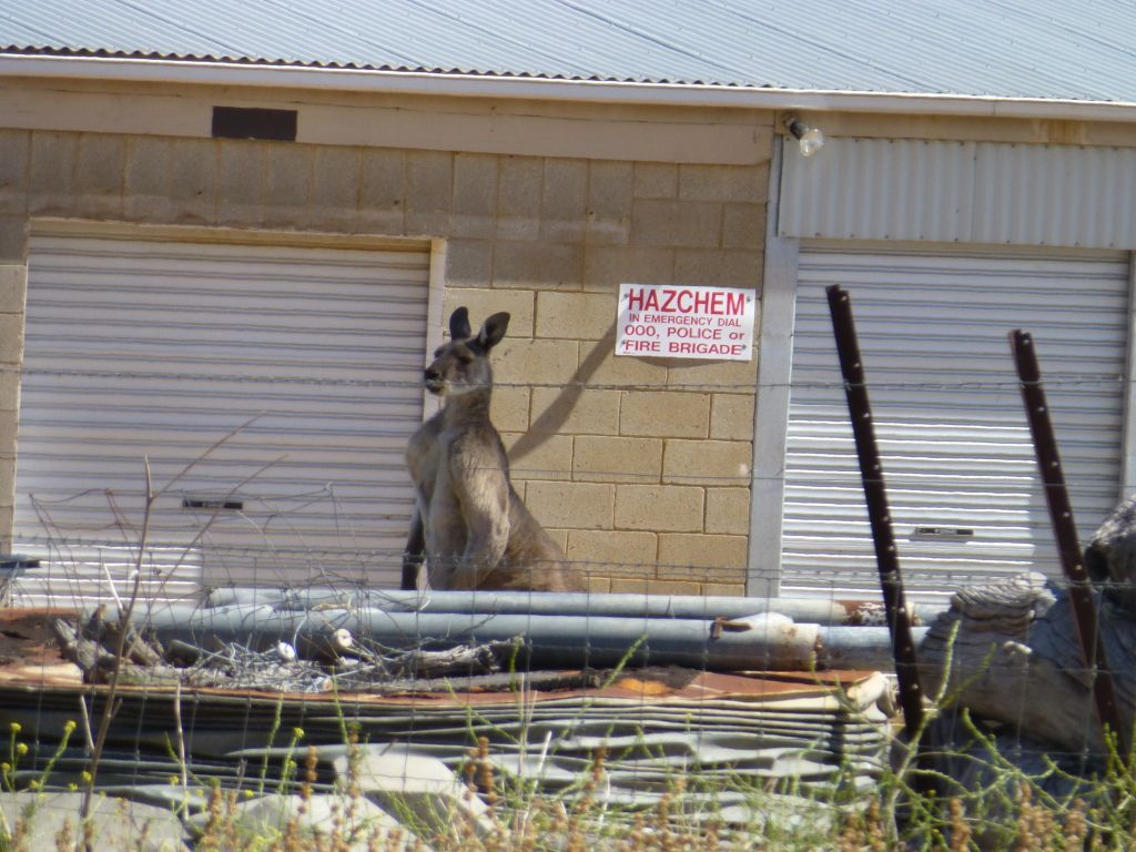 Kangaroo Kick Photo:  This Photo was uploaded by GenkiGoddess. Find other Kangaroo Kick pictures and photos or upload your own with Photobucket free imag...