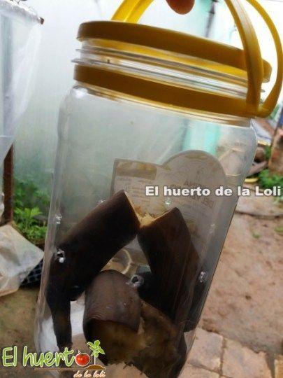 Trampa mosca de la fruta | Insectos | Pinterest | Las frutas ...