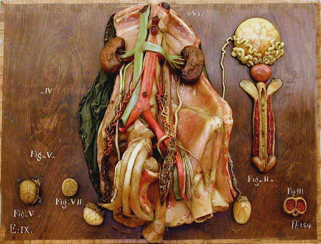 Anatomy Wax Models As Early As 1773 Clemente Michelangelo Susini