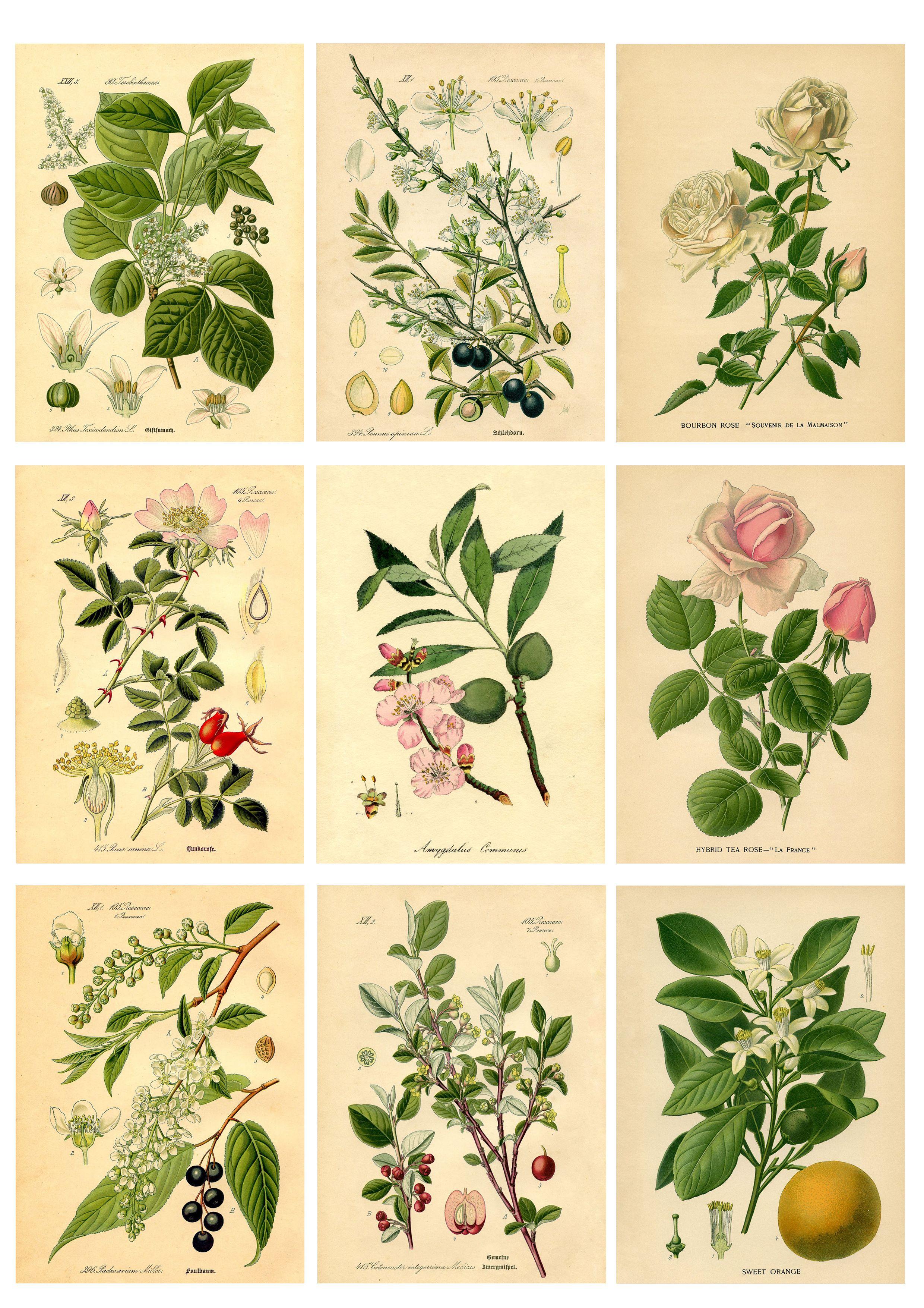 DIY Botanical Labels or Tags - Free printable ...