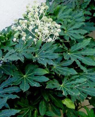 O di ombra elenco piante sempreverdi e foto che - Piante giardino sempreverdi ...