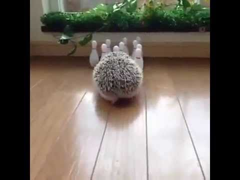 Looks Like A Seven-Ten Split To Me - Hedgehog!