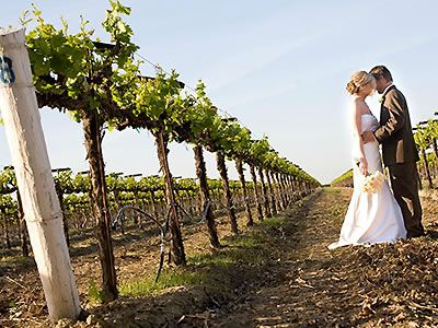 Moravia Wines Vineyard Weddings Fresno Weddings Central Valley Winery 93723  300 site fee  10
