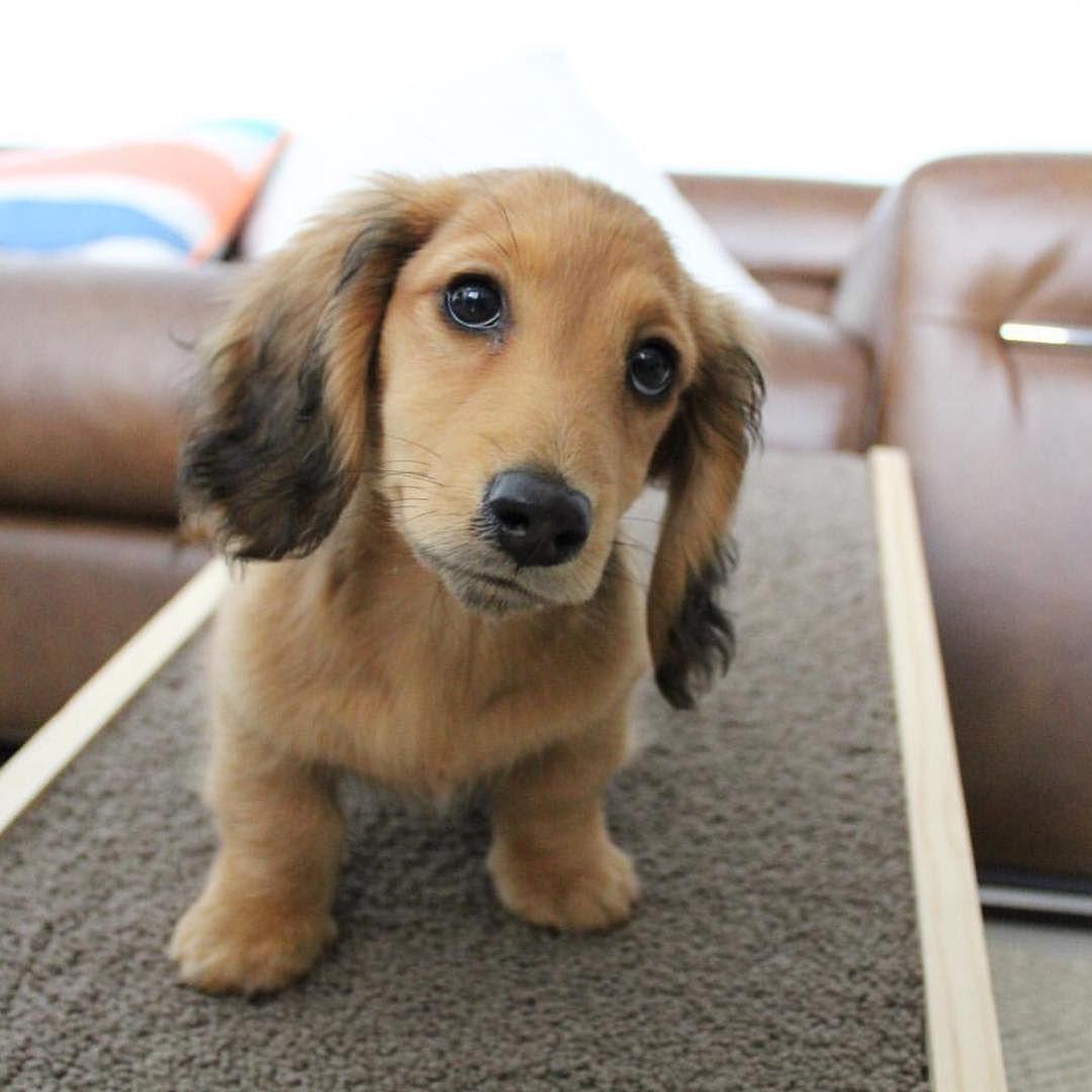 River The Miniature Dachshund Weiner Dog Dog Pictures