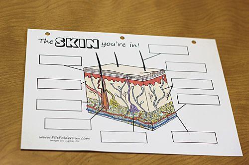 human body the skin human body worksheets and file folder. Black Bedroom Furniture Sets. Home Design Ideas