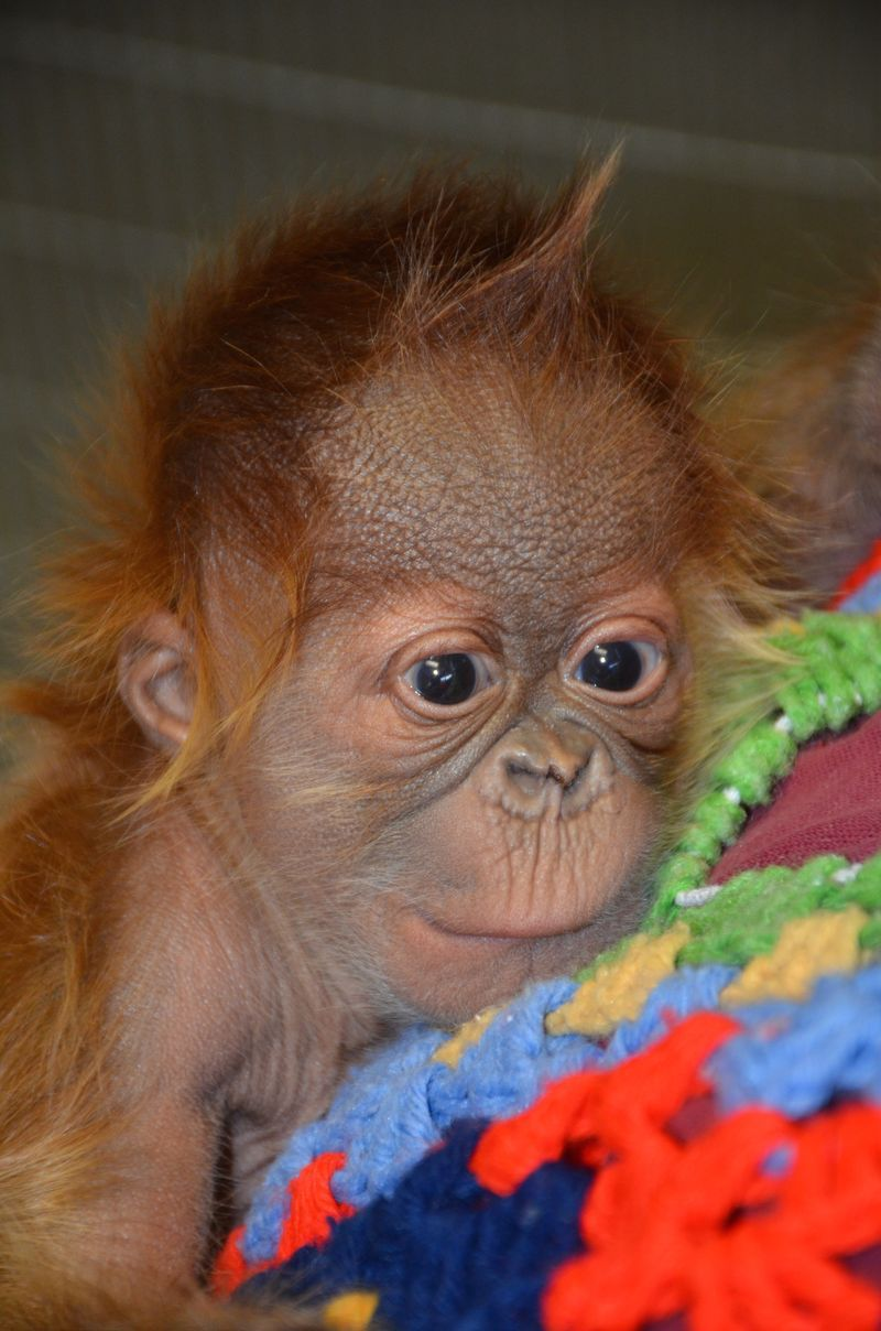 Roses Are Red…and This Endangered Baby Is Too! in 2020