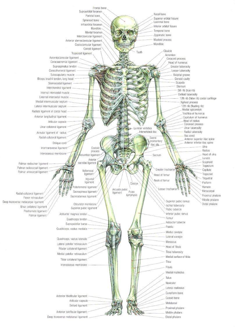 Frederic Delavier Skeleton Strength Training Book Skeleton