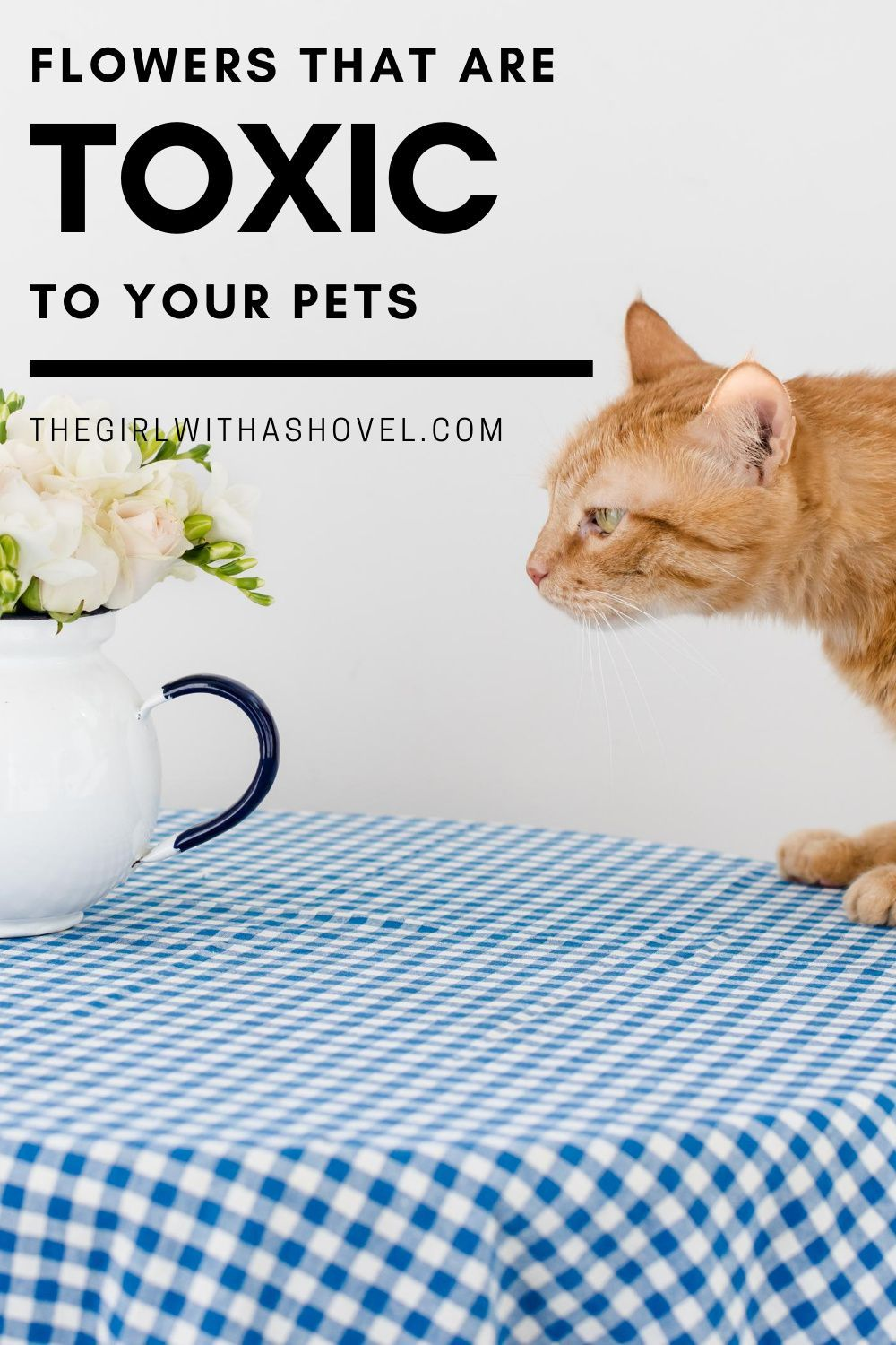 Don T Buy These Flowers To Keep Your Pets Safe Flowers Safe For Cats Flowers Safe For Dogs In 2020 Dog Safe Plants Cat Flowers Indoor Plant Care