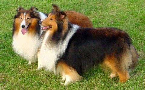 Fluffy Dogs Cute Cats Dogs Best Small Dog Breeds Most