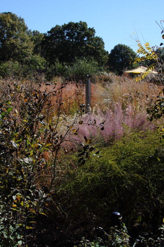 My Big Backyard at Memphis Botanic Garden - Plant Design ...