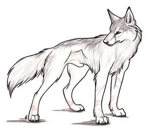 Animatronic Wolf Tails That Wag And Tremble Stand Up And Get Frisky Wolf Sketch Wolf Drawing Anime Wolf