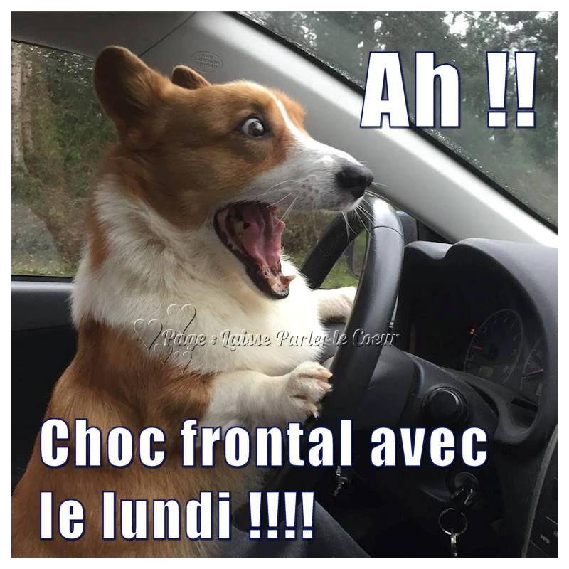 Célèbre Ah !! Choc frontal avec le lundi !!! #demaincestlundi chien  GP39