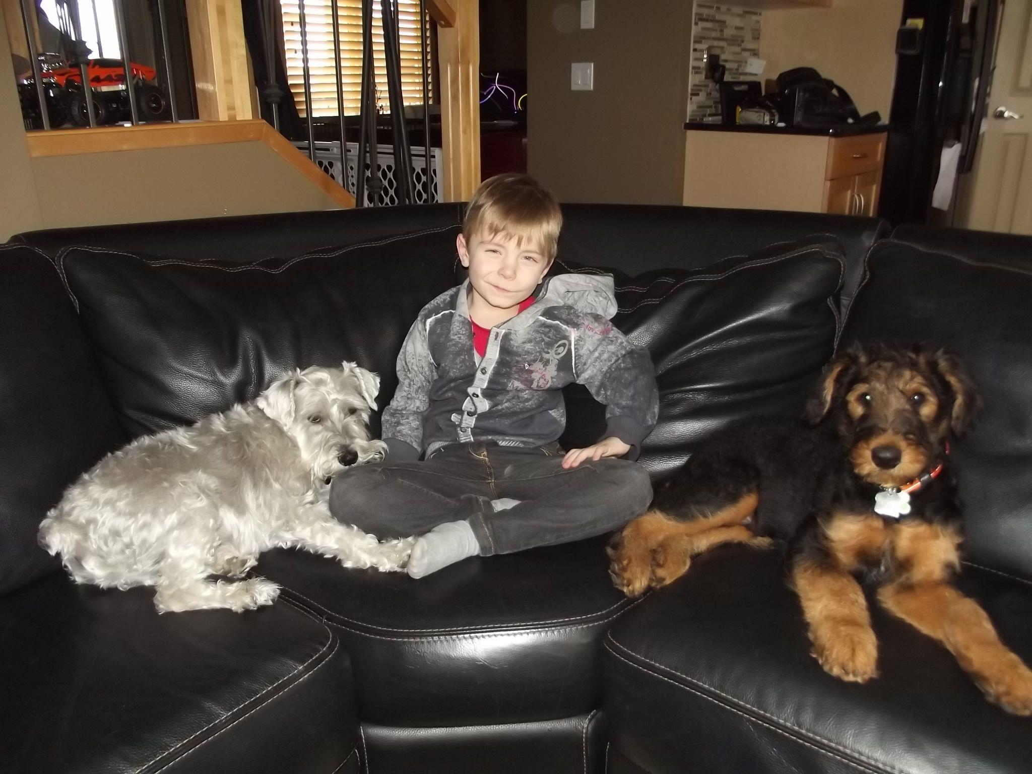 Newman (schnauzer), Brady & Blue (Airedale)