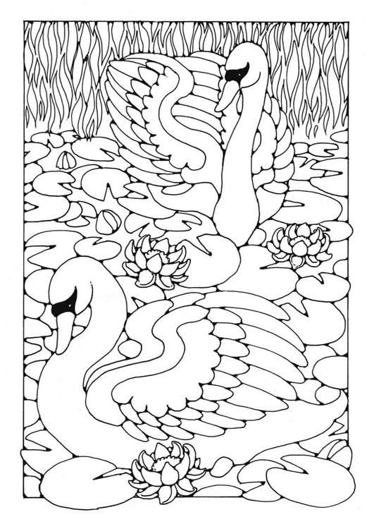 Coloring page swans coloring picture swans free coloring sheets to print and