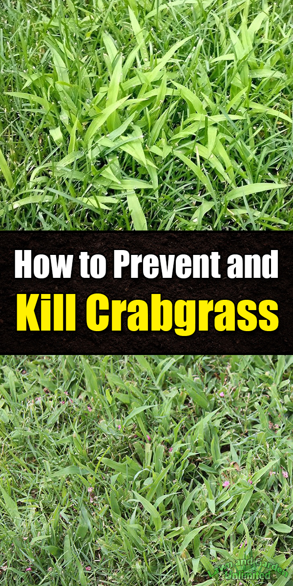 How To Prevent And Kill Crabgrass Lawn And Garden Garden