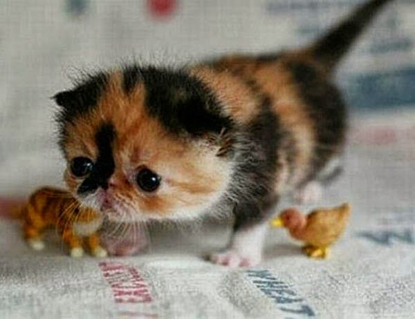 Ahhhhhhhhhhhhhhhhhhhhhhhhhhhhhhhhhhhh So Cute Cute Animals Cute Baby Animals Kittens Cutest