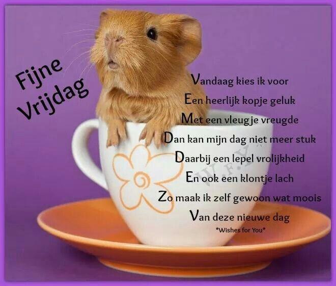 Citaten Voor Goedemorgen : Fijne vrijdag pinterest goedemorgen