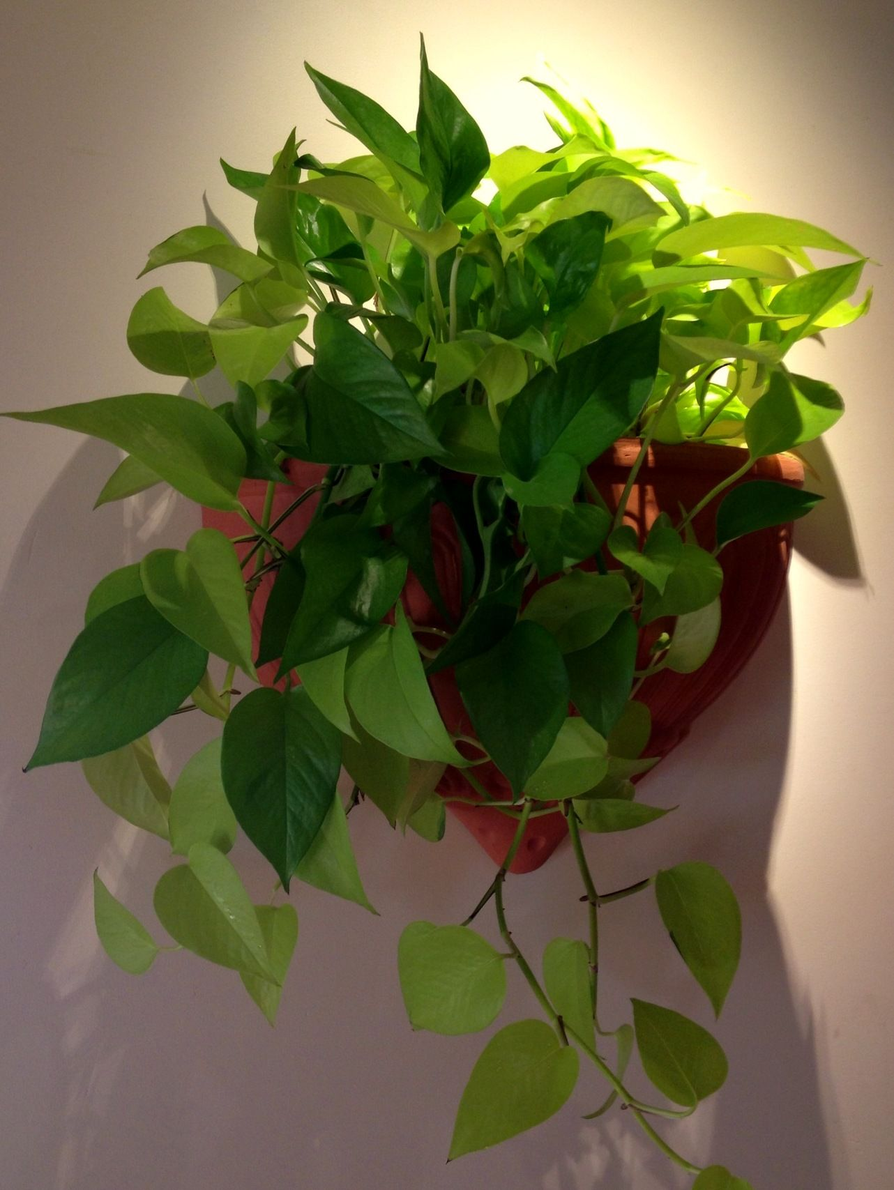 Wall Sconce With A Neon Pothos