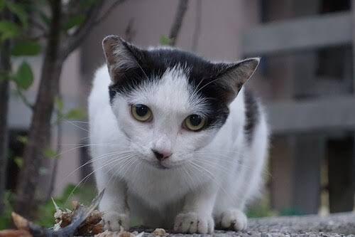 Un gato duerme entre 12 y 16 horas al día, y no lo hacen para conservar su belleza felina. Aquí te contamos cosas sobre el sueño y tu gato.