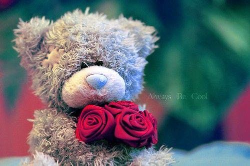 دبدوب وورود الويز بي كول صور Teddy Bear Cool Stuff Good Morning