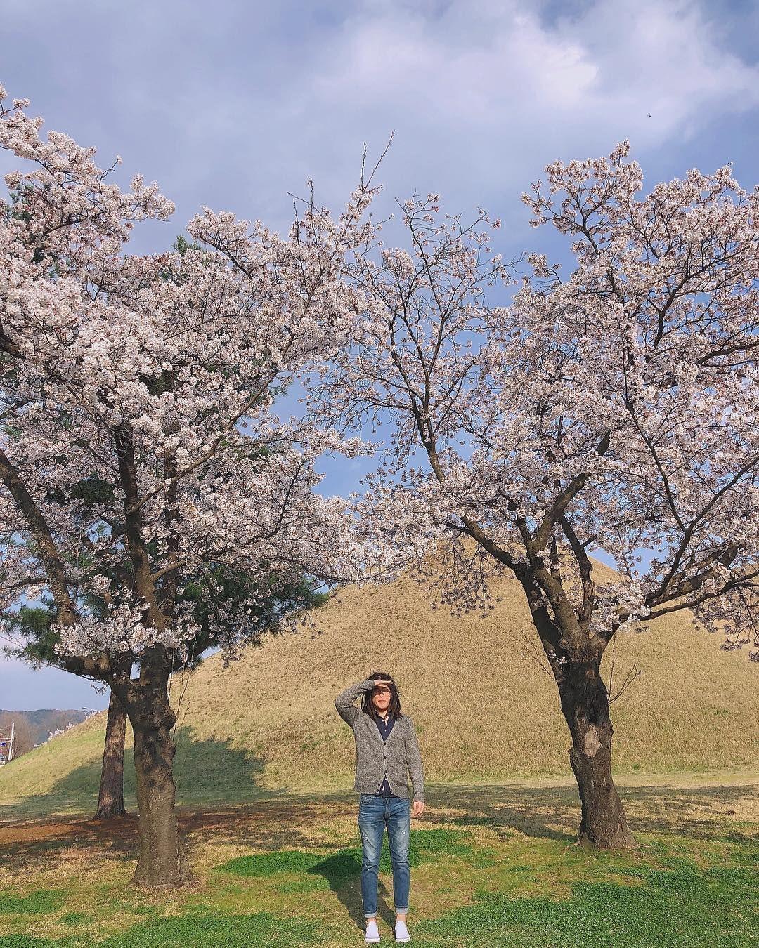 [New] The 10 Best Home Decor (with Pictures) -   . . #경주#봄#봄놀이#벚꽃#벚꽃놀이#데이트#휴무#꿀휴무#대릉원#비타민식#데일리#비타민식#cherryblossom#dayoff#holiday#vitaminsik#daily#l4l#f4f#spring