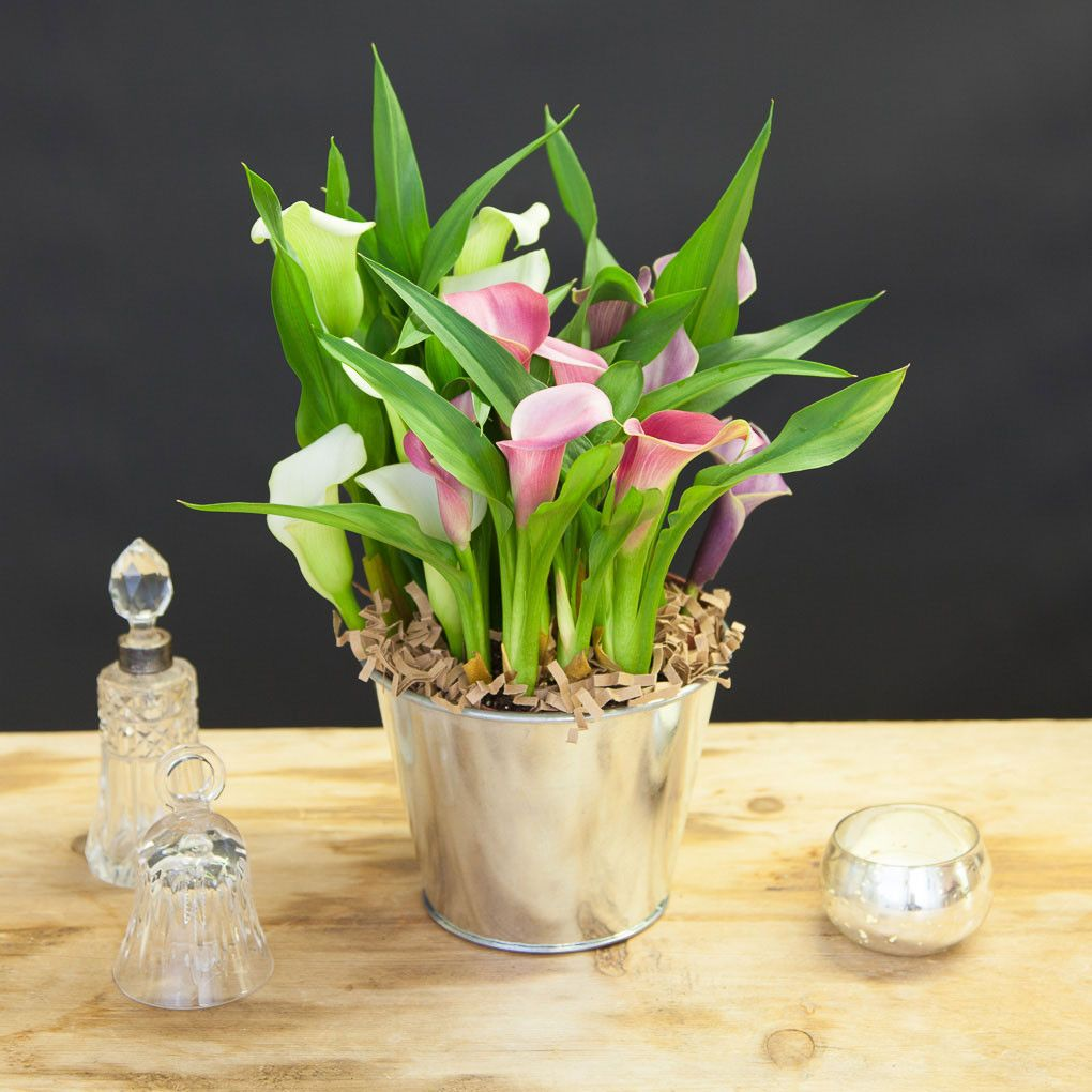 For A Beautiful Table Decoration Our Cala Pot In A Zinc Pot Diy