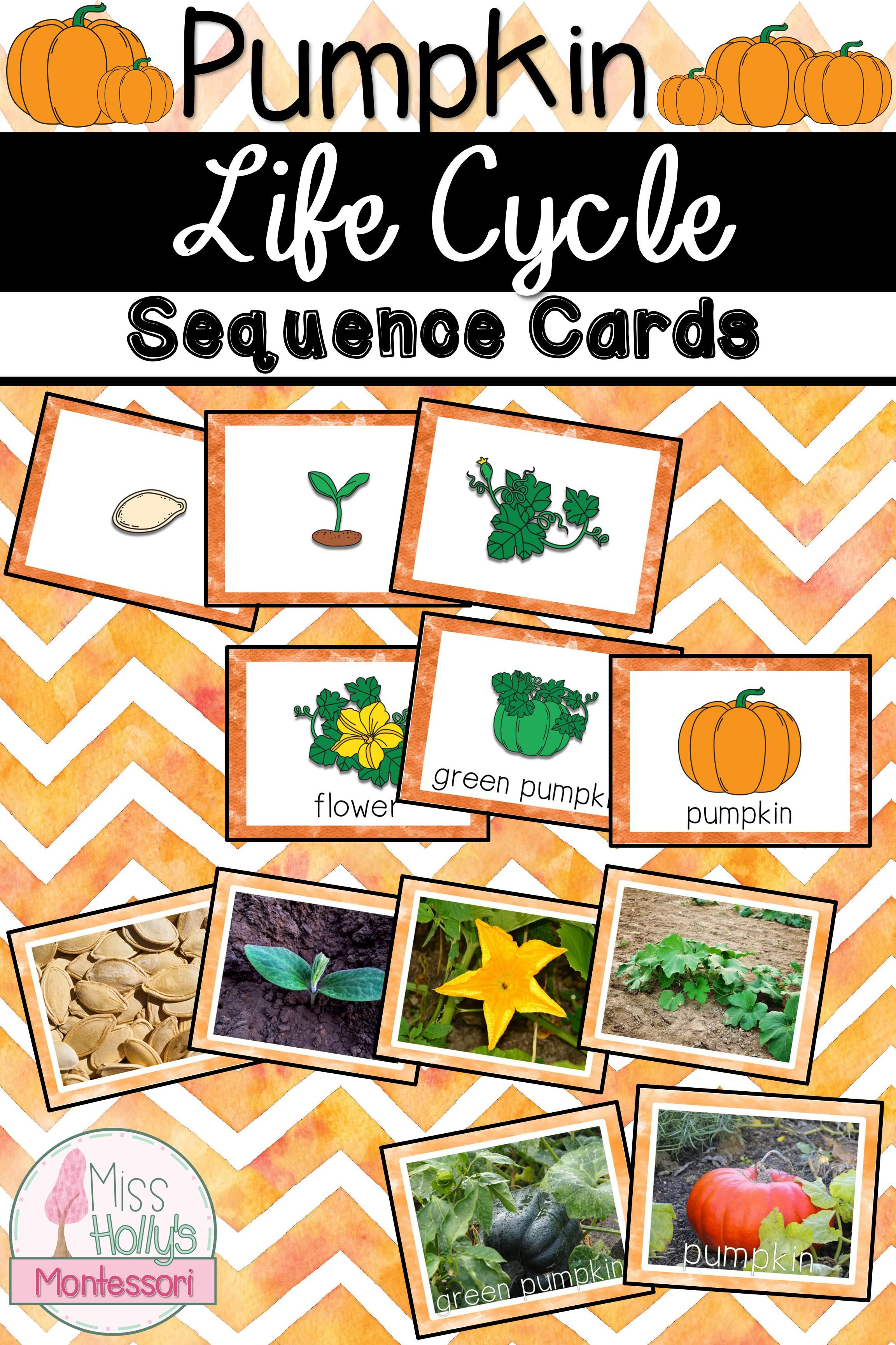 Pumpkin Life Cycle Sequencing Cards Fall Activity