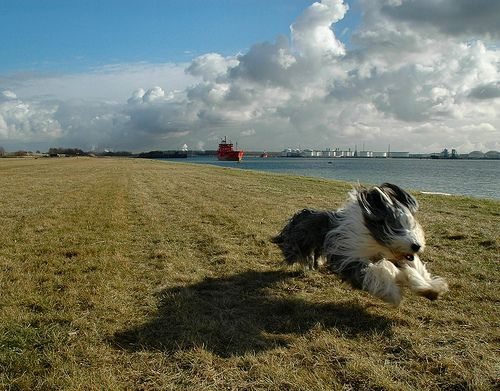 Who Said Dogs Can't Fly? (10 Pics) - My Modern Metropolis