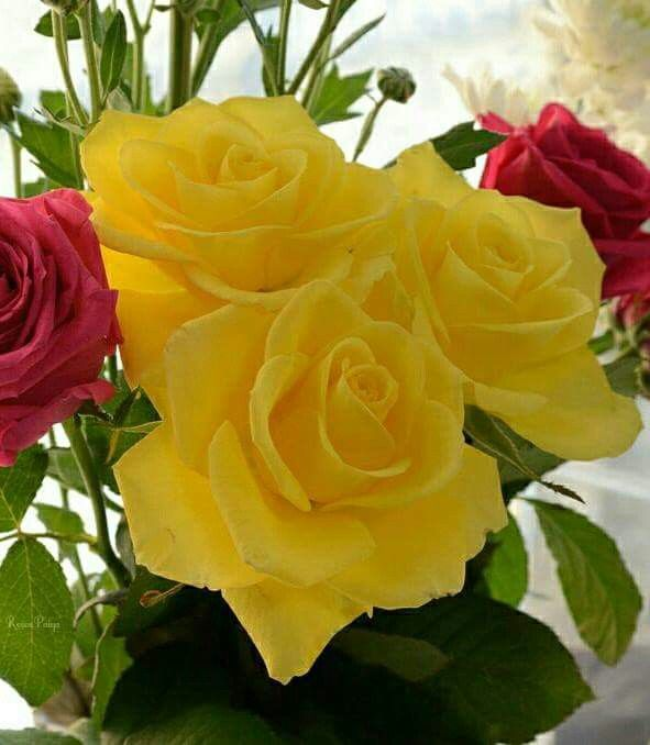 Happy Valentine Day Love And Miss You Both Beautiful Rose Flowers Flowers Flower Video