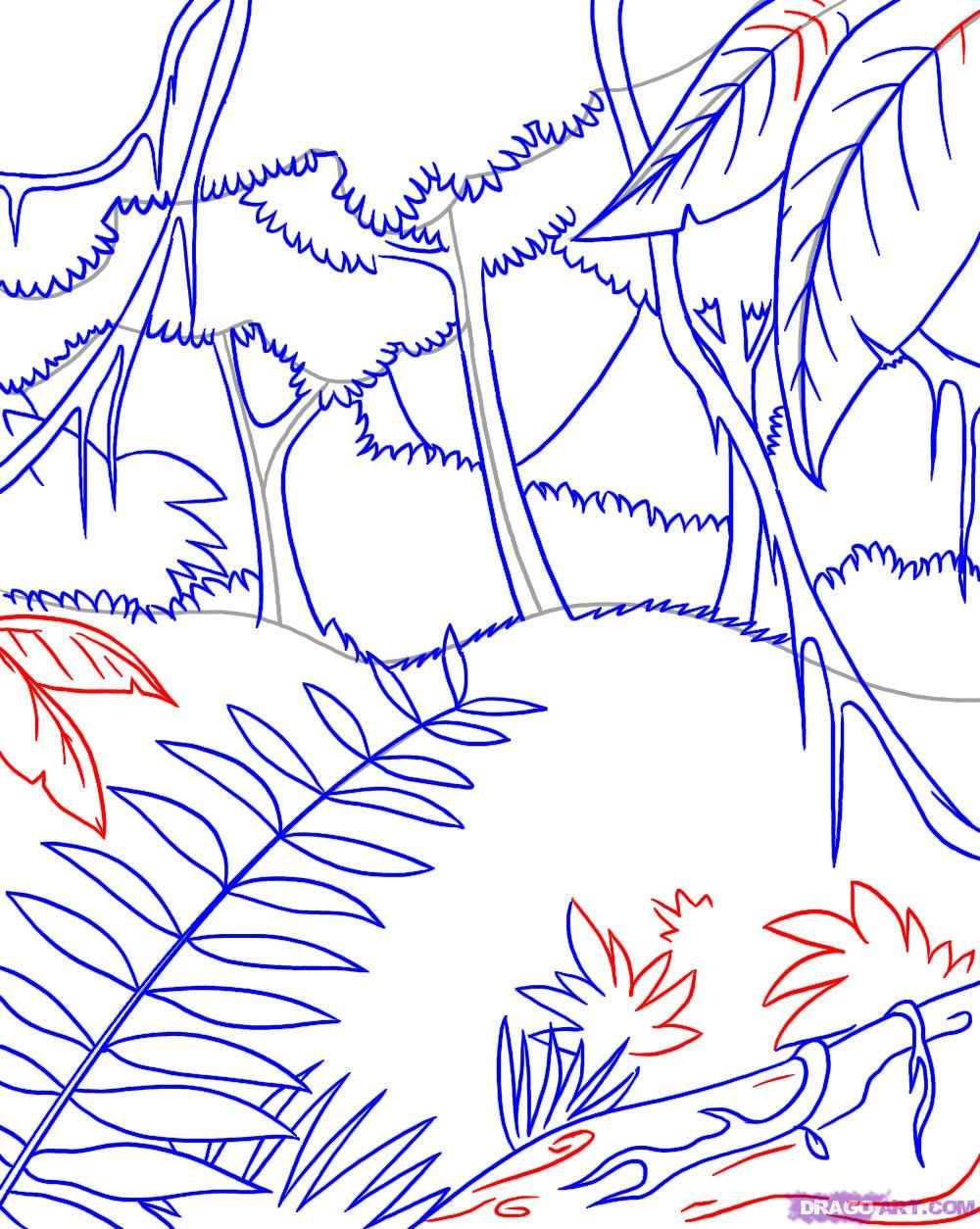 How To Draw A Rainforest Tree : rainforest, Rainforest, Pictures,, Jungle, Drawing,, Scene