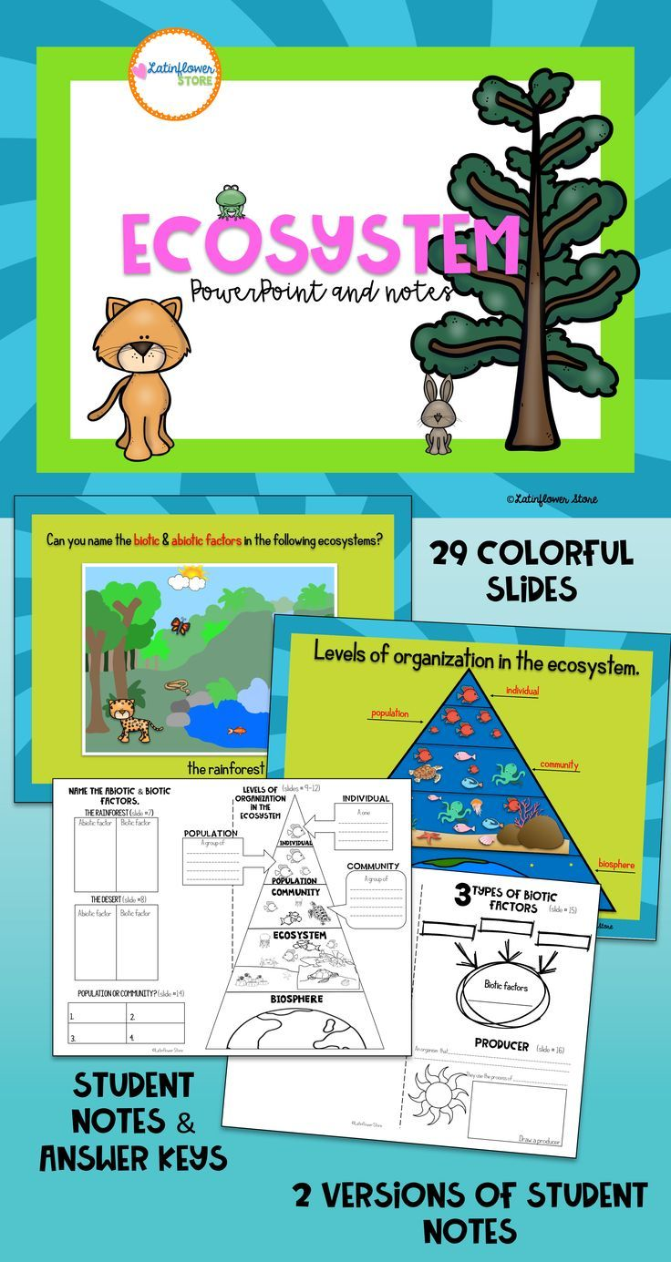 Ecosystem Powerpoint And Notes Ecosystems Interactive Science Notebook Grammar For Kids