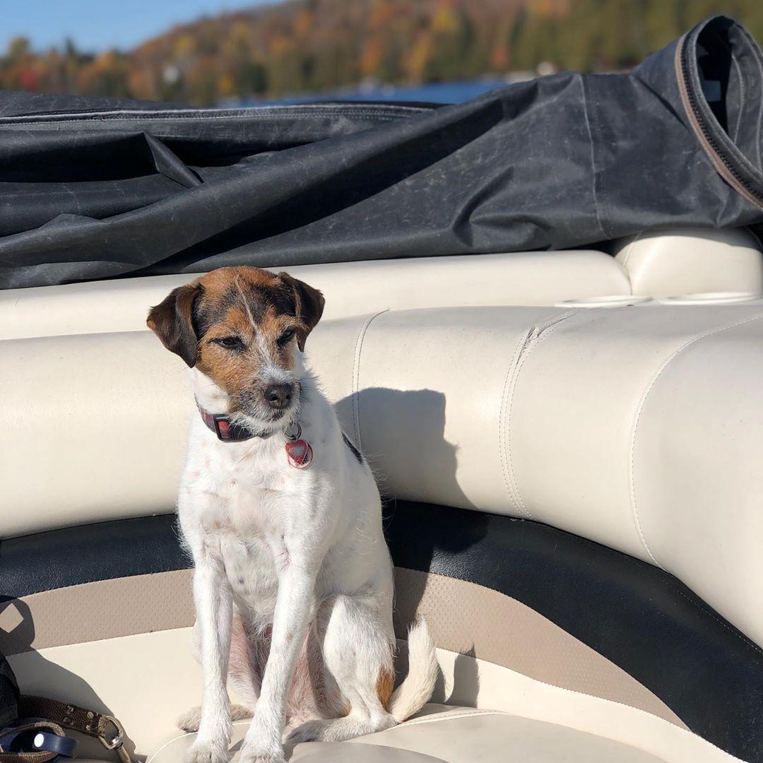 #parsonrussellterrier #xena #dogsofinstagram #dogs
