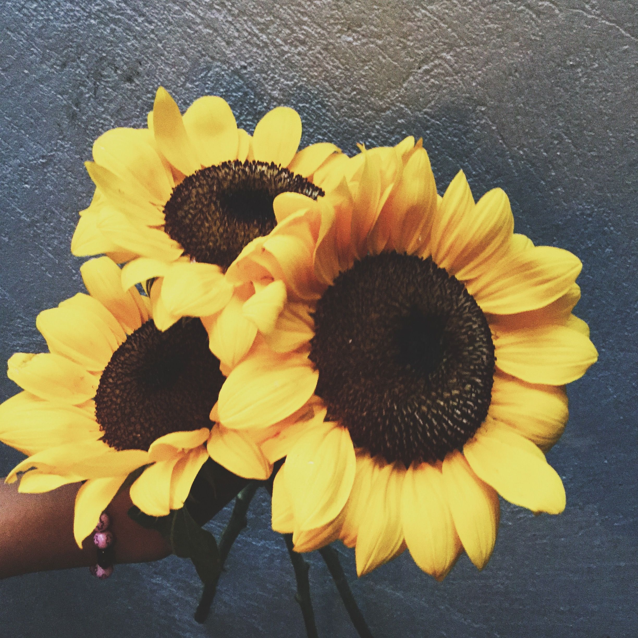 Sunflowers Aesthetic Appleofmyeye Artsy Pictures Flowers Floral Rings