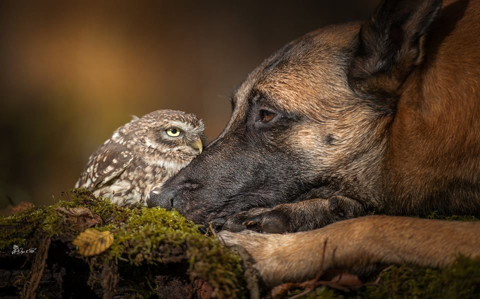 Image result for animal unexpected moments