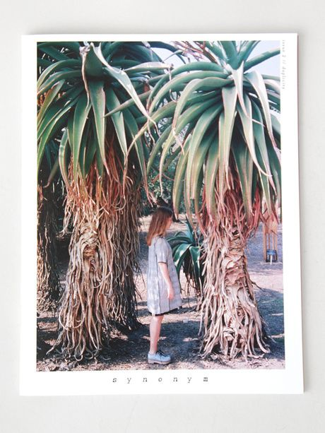 Synonym Journal is lovely  plants  Desert photography