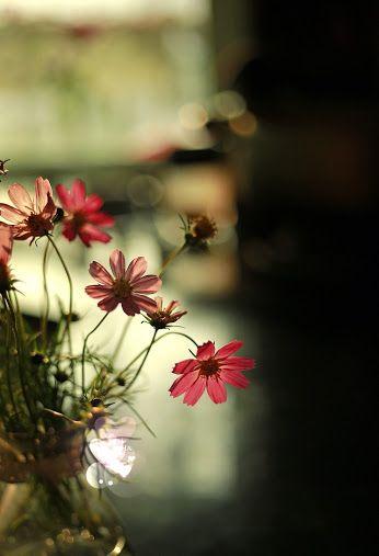 Beautiful Pictures - Κοινότητα - Google+