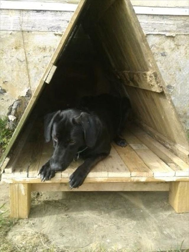 Pallet Dog House Fill With Warm Bedding Or Cedar Chips For A Outside Time Spot In The Winter