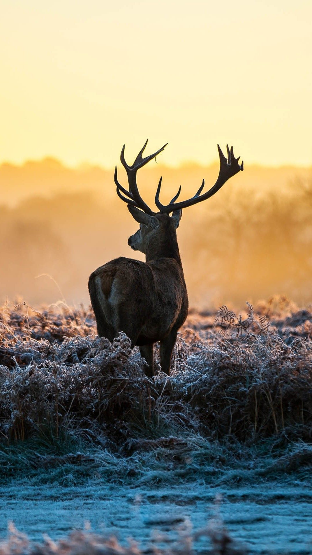 Reindeer Wallpaper Ausgestopftes Tier Susseste Haustiere Tiere Wild