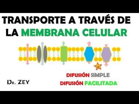 Difusion Simple Y Facilitada Transporte Pasivo Youtube Transporte Pasivo Celula Procariota Y Eucariota Transporte