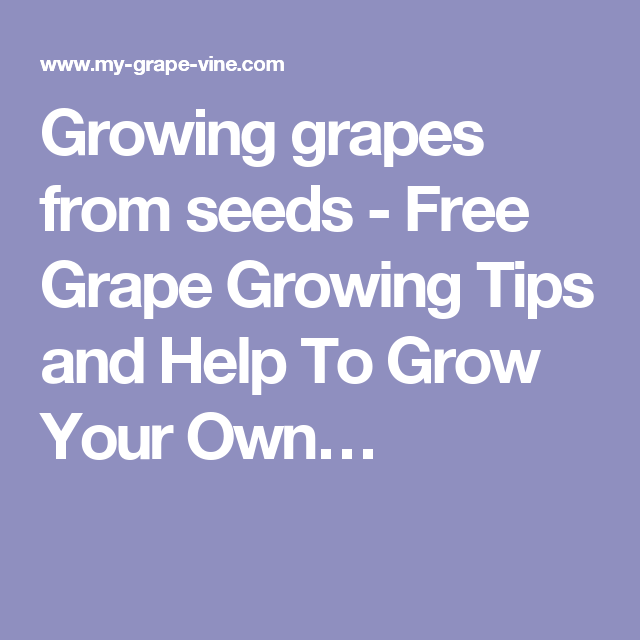 Growing grapes from seeds - Free Grape Growing Tips and Help To Grow Your Own…