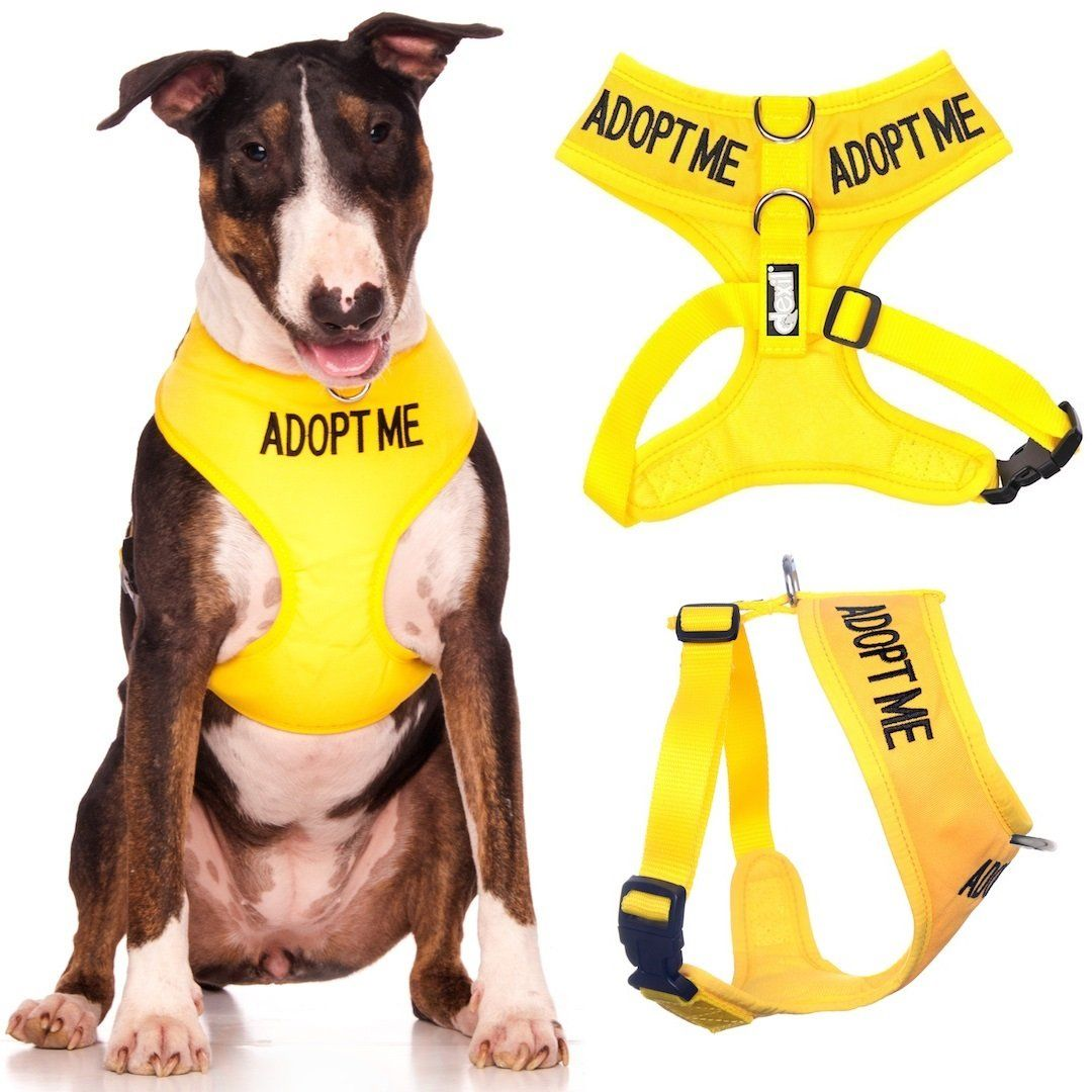 Adopt Me I Need A New Home Yellow Color Coded Non Pull Front And