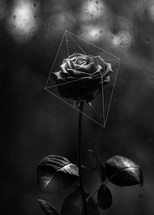 Archillect On Twitter Black Roses Wallpaper Black Aesthetic Wallpaper Dark Wallpaper