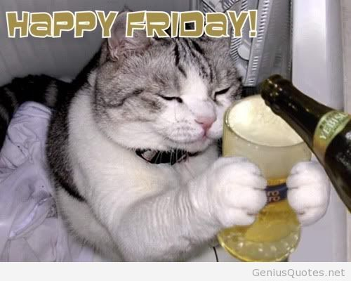 Happy Friday – cat pic   Cat quotes funny, Cat memes